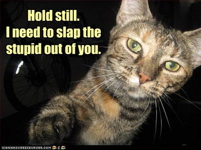 cat-slap-the-stupid-out-of-you