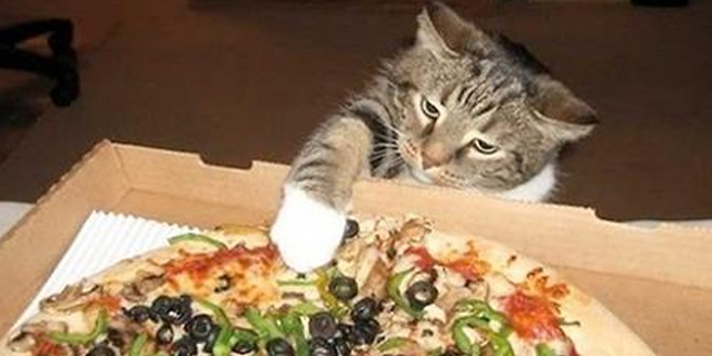 cat-and-pizza