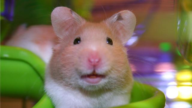 grinning mouse