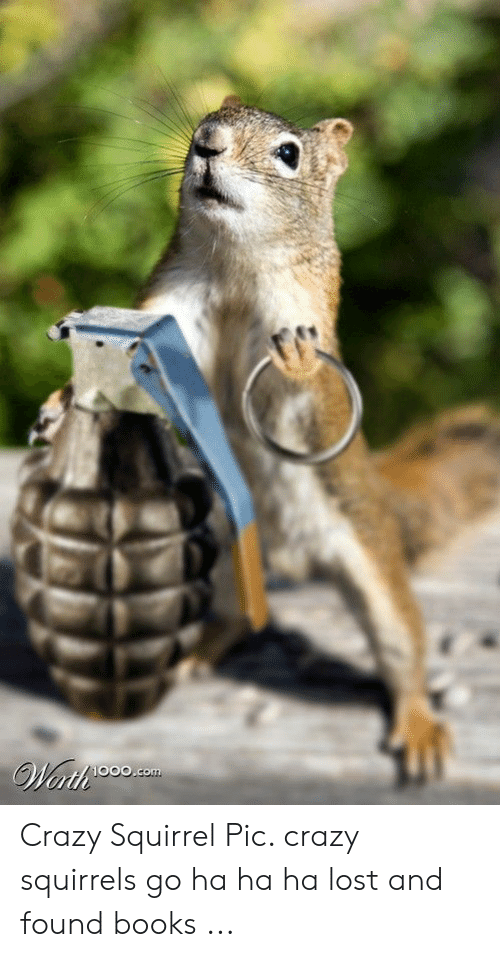 crazy-squirrel-pic