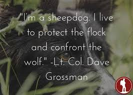 sheepdog life