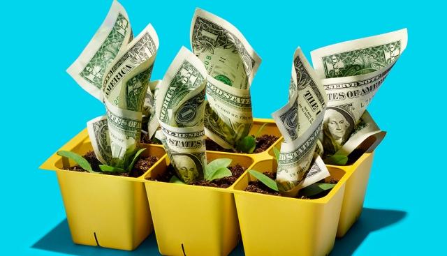 growing cash
